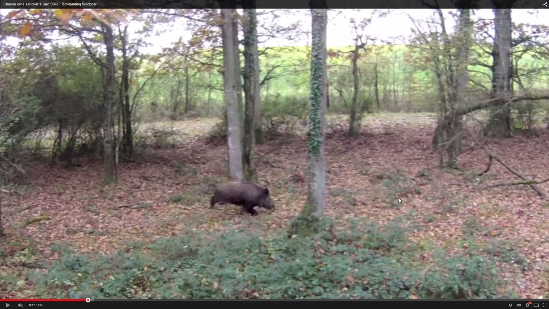 arc 90kg _ Bowhunting Wildboar - YouTube