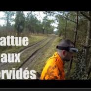 Battue aux cerfs : Mon premier cervidé
