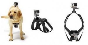 Fixation harnais pour chien