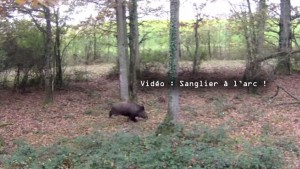 Sanglier Arc