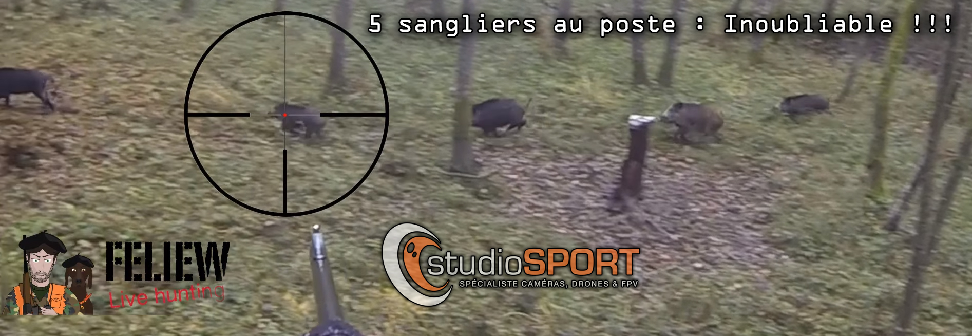 sangliers Youtube vidéo chasse