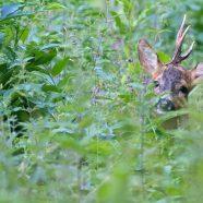 CameraChasse vous souhaite une excellente saison de chasse d'été !